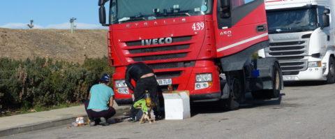 camiones comiendo conductor dumping