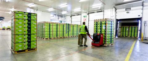 ap-tarragona-almacen-plataforma-frio-cajas-fruta-carga-camiones-transpaleta